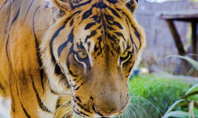 Parque Zoológico de Quilpué