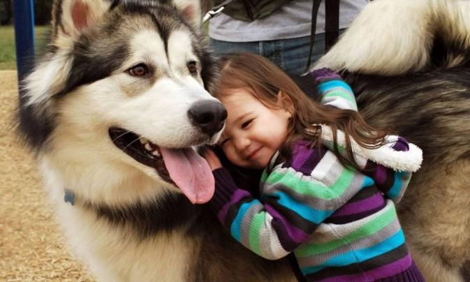 Campaña de Desparasitación de Perros y Gatos